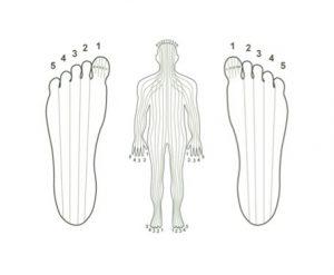 5-zones-corps-et-pieds