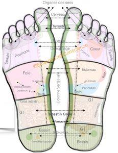 pieds - formation reflexologie - cartographie