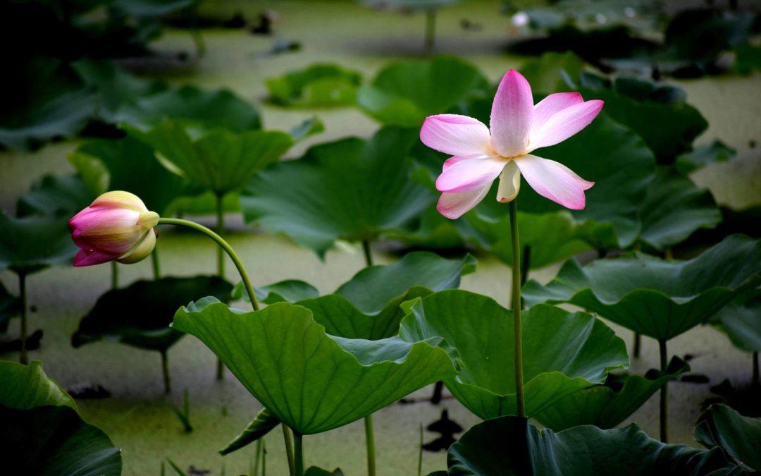 Le Zen baromètre