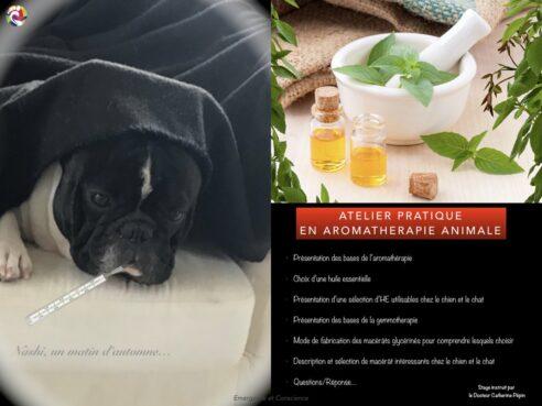 aromathérapie animale stage